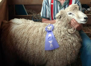 Ram and Best in show fleece