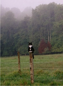 Molly, Standing gard on fencepost